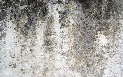 Pourquoi réaliser une décontamination de moisissure ?